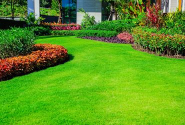 Landscaping & Garden Maintenance