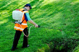 lawn insect control dallas