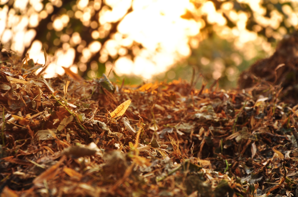 Mulching Leaves on Commercial Landscaping