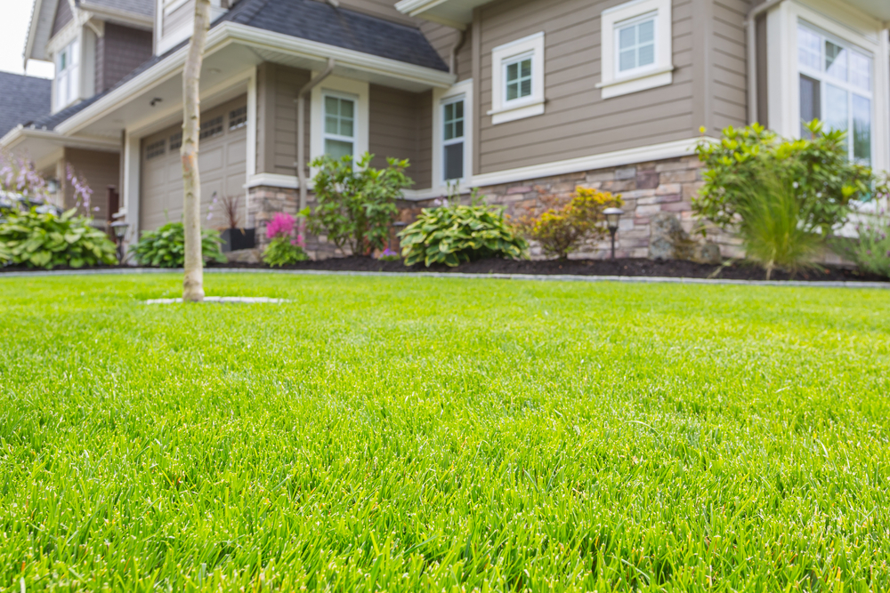 Lawn Care Resolutions You Can Keep in 2020