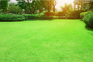 Perfectly Cared for Lawn