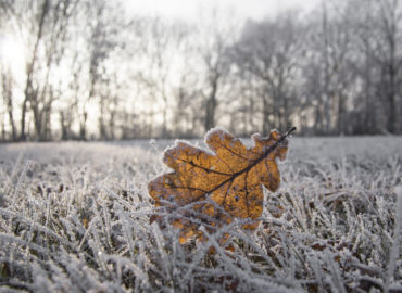 How to Repair Your Lawn After Freezing Weather