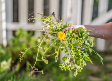 Top Ways that Weeds can Damage Your Lawn and Flower Beds