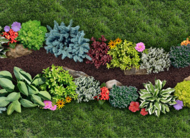 What Plants Should You Prepare for Your Fall Flower Bed?